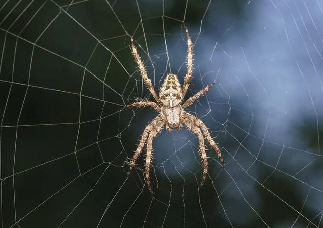 How can you keep spiders out of your home.
