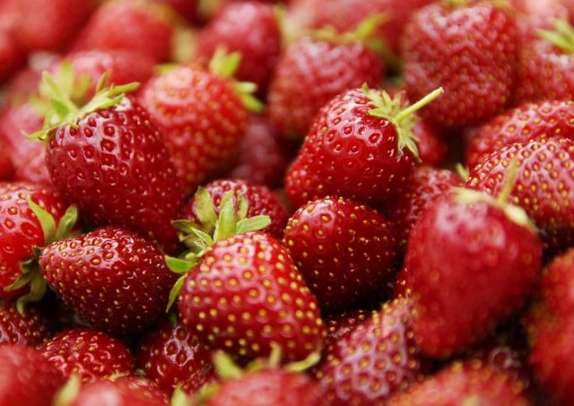 Spanish strawberries travel more than a thousand miles to satisfy our demand for seasonal fruit out of season. Picture: PA