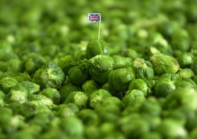 Eccentric Party calls for Brussels sprouts to be renamed after Brexit. Picture: PA photo/Haydn West