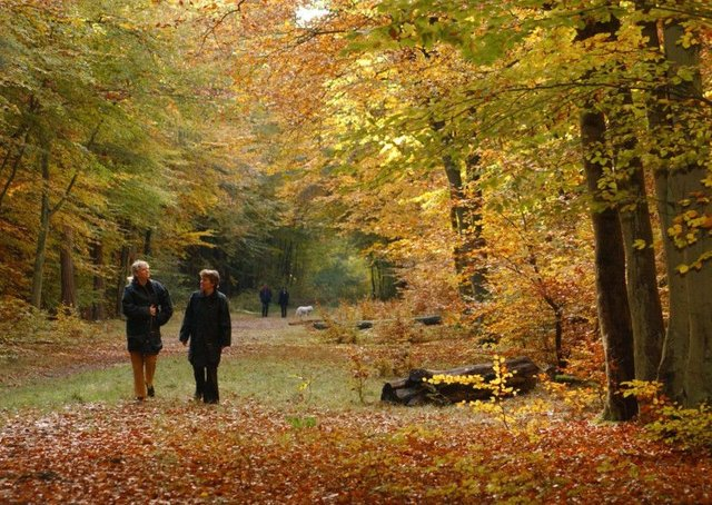 Walkers on a woodland trail.