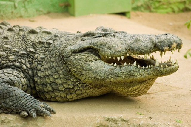 Authorities have said they will give the man-eating crocodile a home if they capture it (File photo: Ian Georgeson)