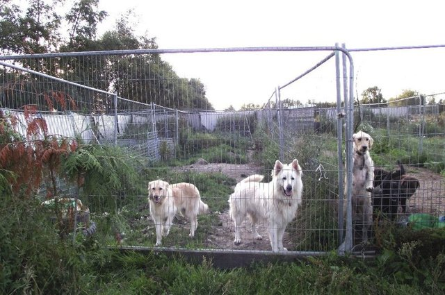 Scottish Labour has pledged a clampdown on illegal puppy farms. Picture: Contributed