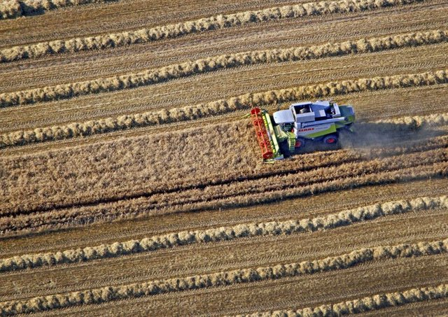 This year's harvest has been hit hard by the wet weather. Picture: Andreas Dunker/AFP/GettyImages