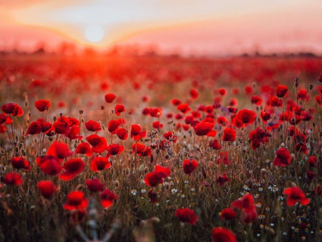 When Is Remembrance Day 2019 What Does It Commemorate And Why Do