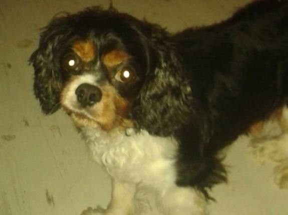Alfie's body was found in a canal. Picture: Scottish SPCA