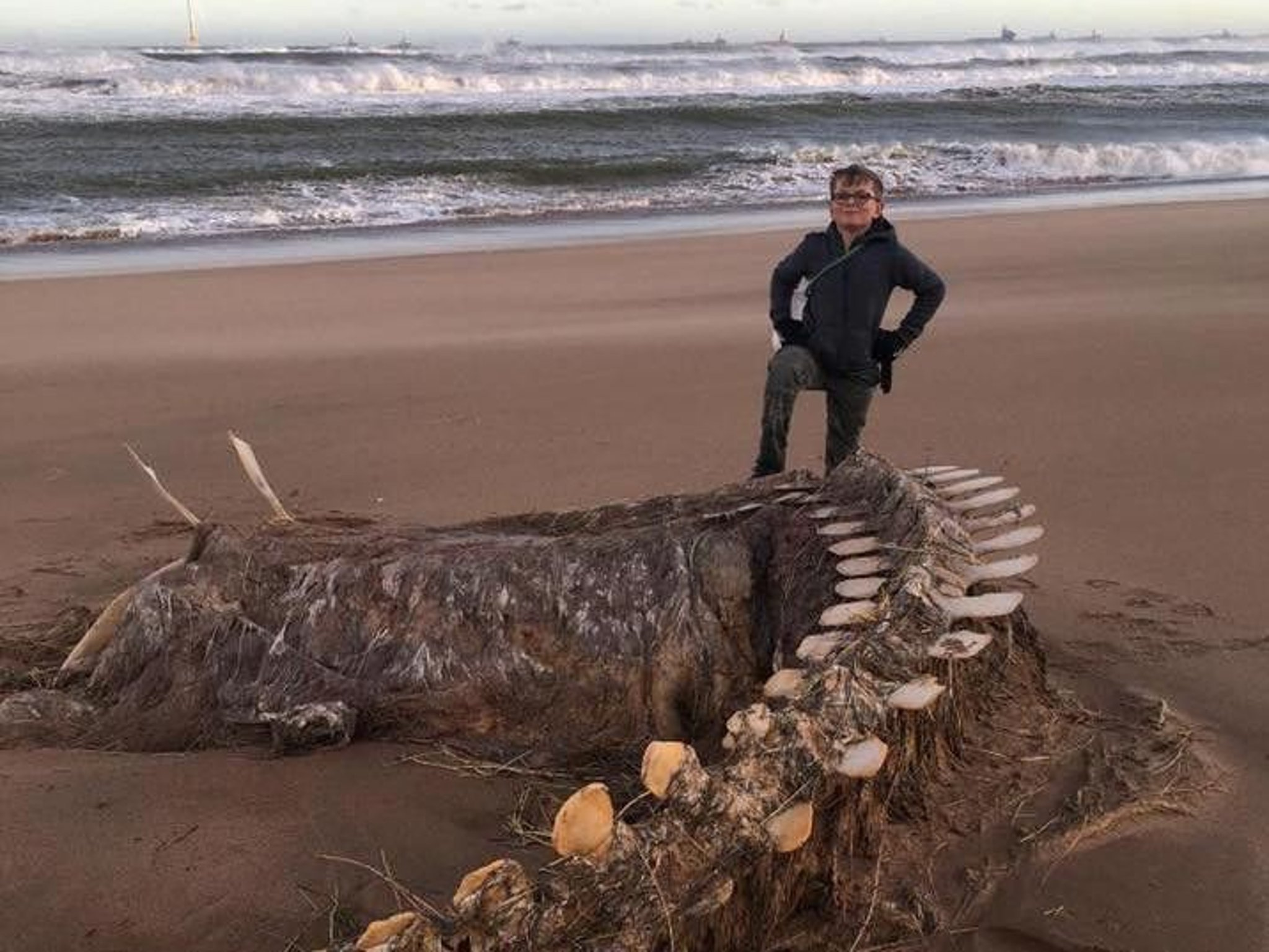 It's Nessie' - Mystery skeleton washed up on Scots beach leads to speculation it's Loch Ness Monster | The Scotsman
