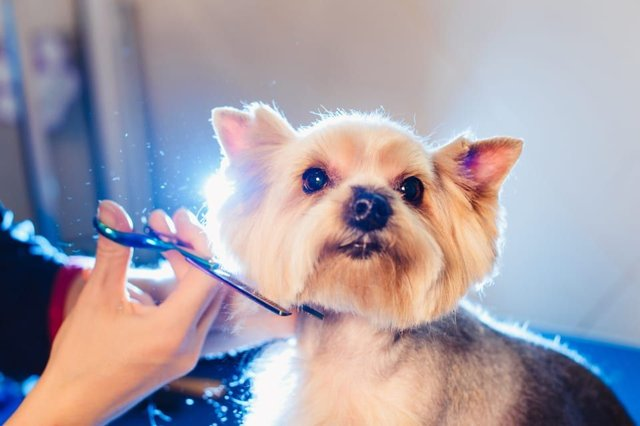 The new eight part programme aims to find the best dog groomer in the UK (Photo: Shutterstock)