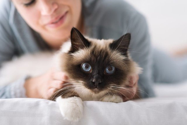 Cat behaviour is often misunderstood by us humans, which has sadly given them the reputation for being indifferent or aloof.  (Shutterstock)
