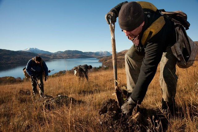 The figures show that 10,860 hectares were planted, the second highest level since 2001. Picture: John McFarlane/Scottish Forestry