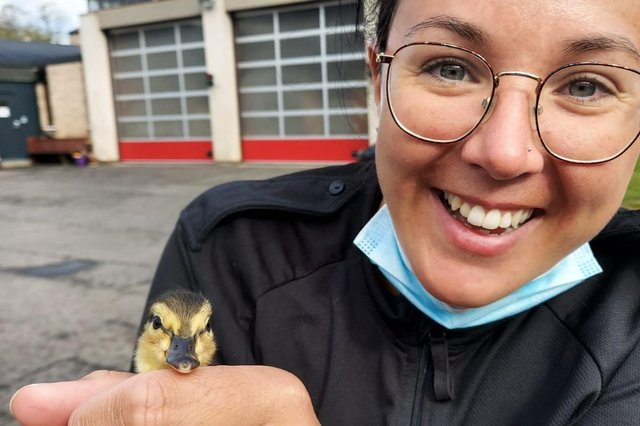 An officer pictured with one of the ducklings on Wednesday morning, April 28, at Haddington Police Station (Photo: Police Scotland).