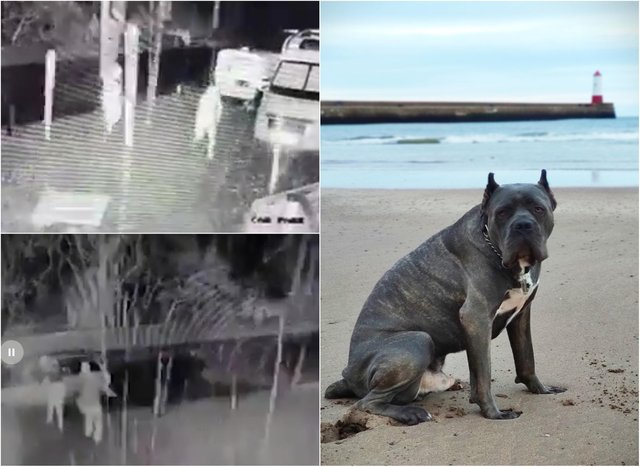 Rocco alerted his owner to the intruders on Wednesday night. Video and images: Craig Foggo