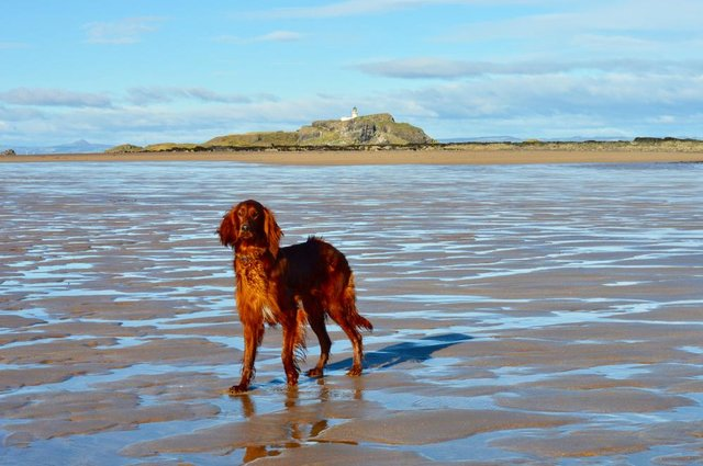 Yellowcraig Beach is a popular spot with East Lothian dog walkers (Shutterstock)