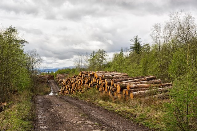 A surge in demand for timber, rather than supply problems, is the reason behind a shortage of wood in the UK (Picture: Getty Images/iStockphoto)
