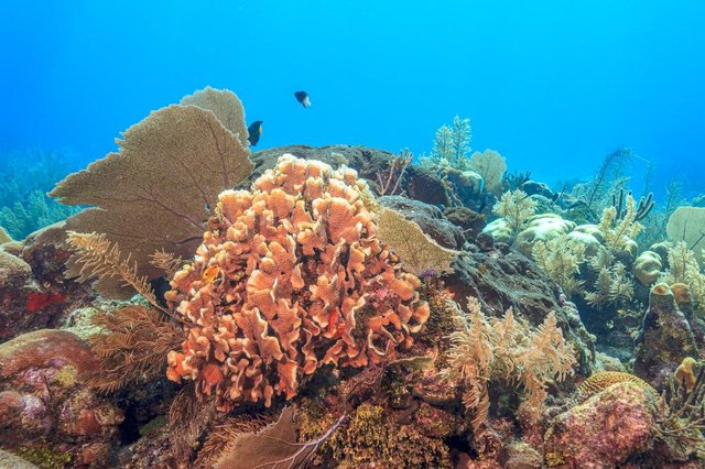 Around 50% of the world's coral reefs have been depleted.