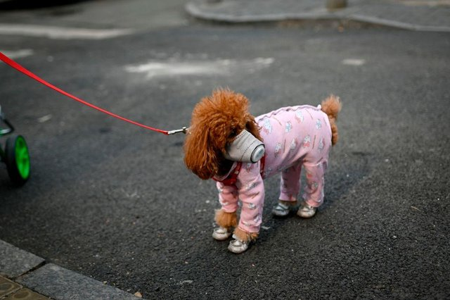 This is what you need to know about how coronavirus affects pets during the outbreak (Photo: STR/AFP via Getty Images)