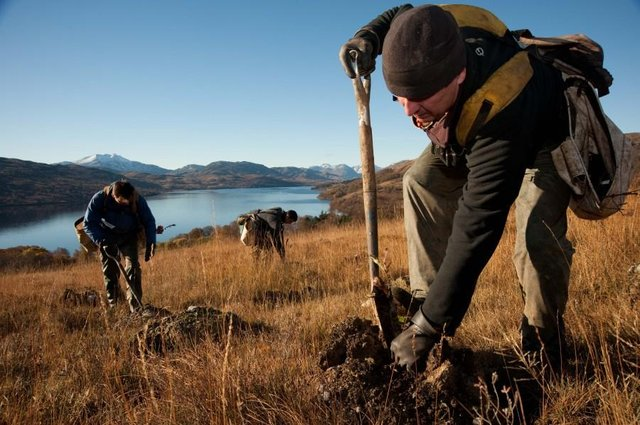 A total of 10,860 hectares of new trees were planted across Scotland in the past year,  slightly short of the target for 12,000 hectares