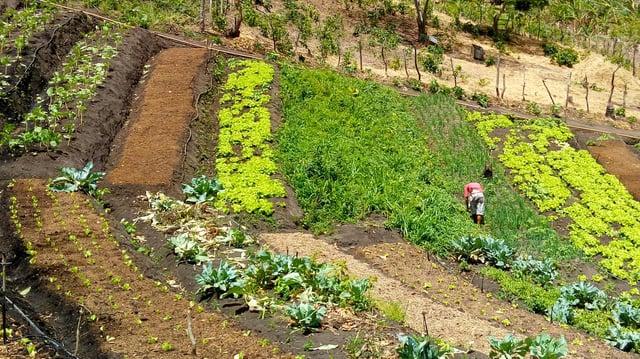 Verdantgardens provide the vegetables farmers are selling via WhatsApp