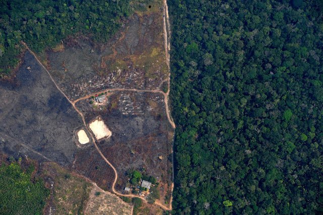 Deforestation of the Amazon rainforest is cause for international concern but Scotland needs to look after what remains of its own rainforest (Picture: Carl de Souza/AFP via Getty Images)