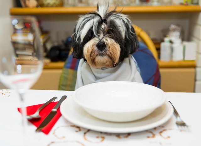 No matter how much your dog begs, there are some foods that should be kept off their plate.