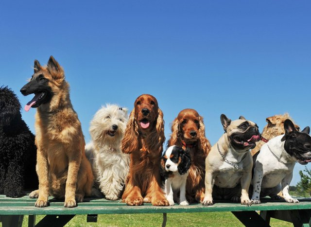 If you are looking for a new dog, there are certain breeds that just don't mix that well with young children.