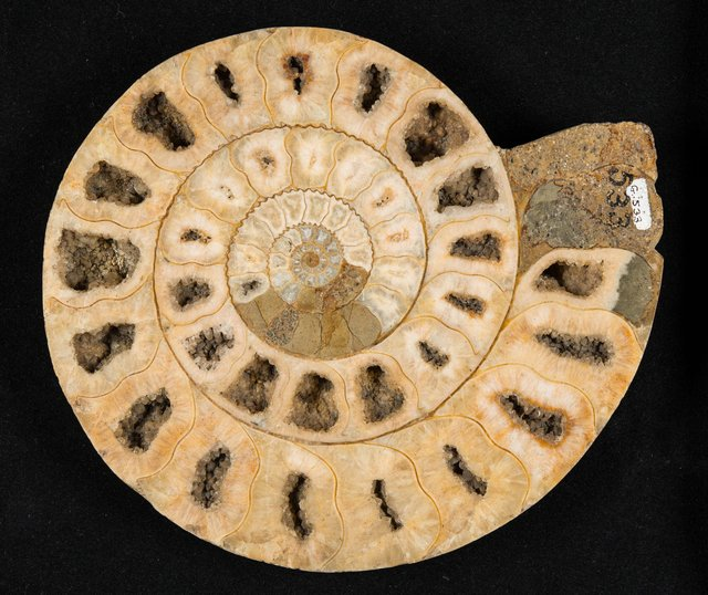 Scotland's national collection of fossils contains more than 250,000 specimens and tell us much about how life on earth was formed. PIC: Paisley Museum and Art Galleries.