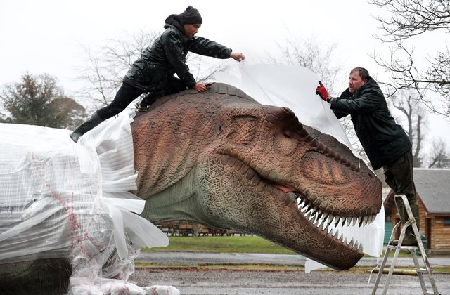 Song Hongbin and Gary Gilmour(right) from Blair Drummond Safari Park unwrap and check a Tyrannosaurus rex after it arrived at the park for their new exhibition