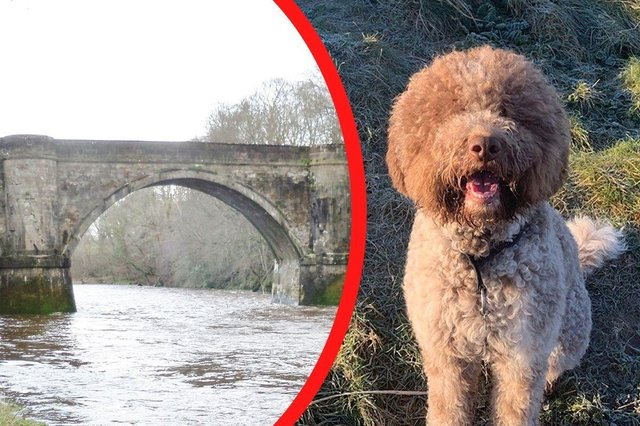 Monty the lagotto romagnolo crashed through the ice covering the River Ayr in Prestwick, Scotland, while his owners looked on.