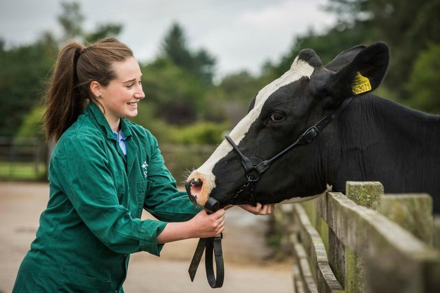 Scotland's Rural College is setting up a new vet school in Aberdeen, with outposts around the country, offering a range of courses to help meet demand for training in key areas. Picture: Chris Watt