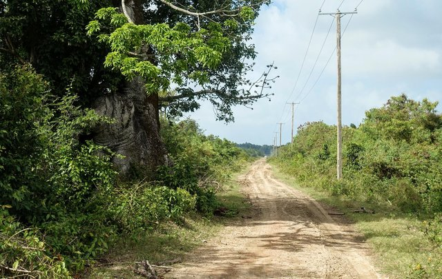 The road into the abandoned Waterloo sugar plantation in Suriname, South America, once owned by Fife doctor Sir James Balfour -  a 'strange man' of great wealth who owned some 700 slaves.