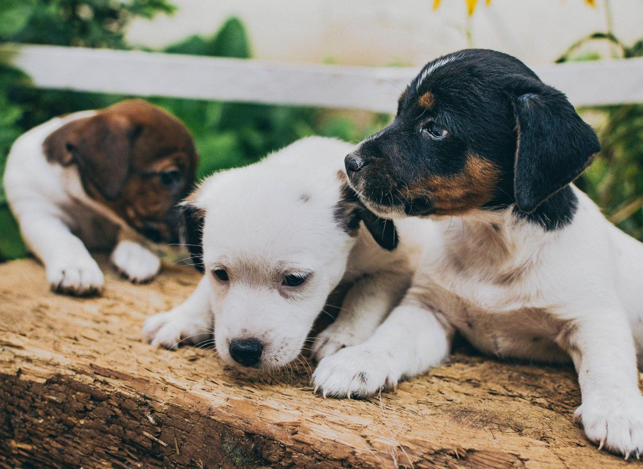Berikut adalah 10 nama anak anjing betina paling populer di Inggris untuk anjing yang menggemaskan