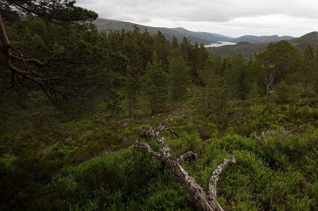 Scotland accounts for 80 per cent of tree planting in the UK (Picture: Getty)