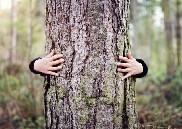 Tree hugging: Planting more trees and then felling some of them will help Scotland boost biodiversity