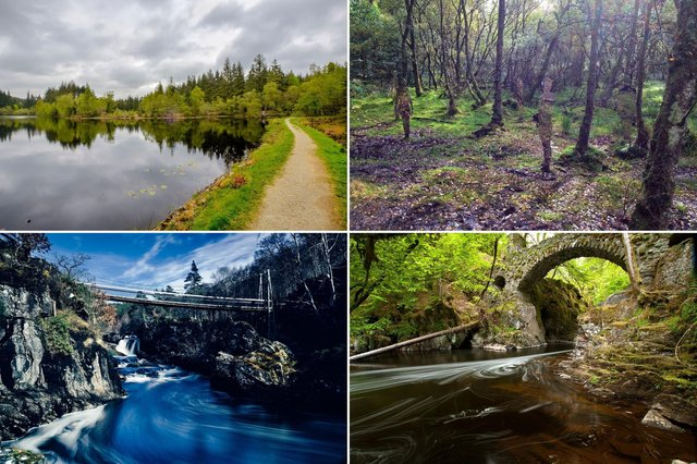 Some of the most beautiful forest walks in Scotland.