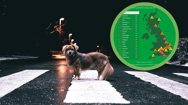 A recent survey shows that Perth is in the the top ten for places in the UK with the most roadkill (Photo: GoCompare).