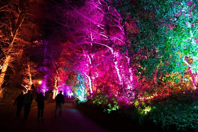 The bright lights of Edinburgh Zoo's Christmas Nights events will be making their return for a second year running, RZSS has announced.