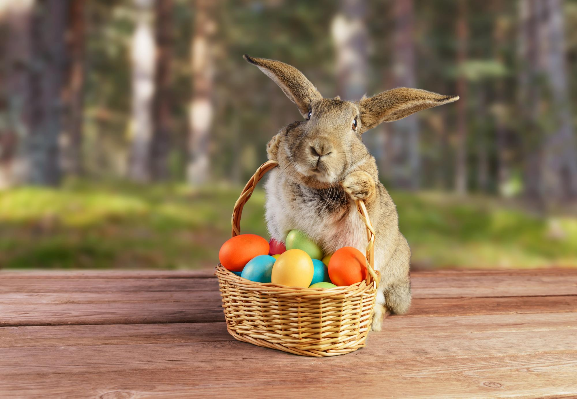When Does The Easter Bunny Come Story Behind The Famous Rabbit We Celebrate At Easter And When He Delivers Chocolate Eggs The Scotsman