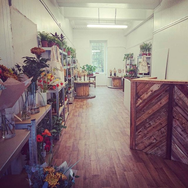 A peek inside Newington's latest plant shop, offering a selection of succulents, large leafy houseplants and dried flowers