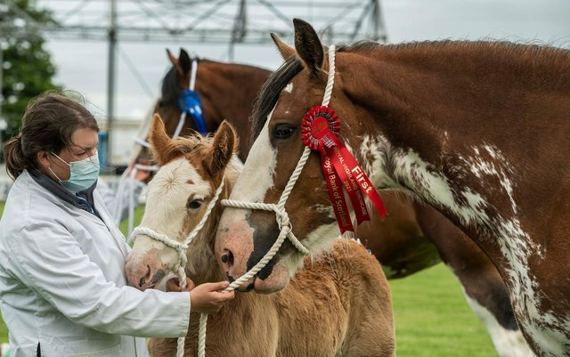 Royal Highland Show winners
