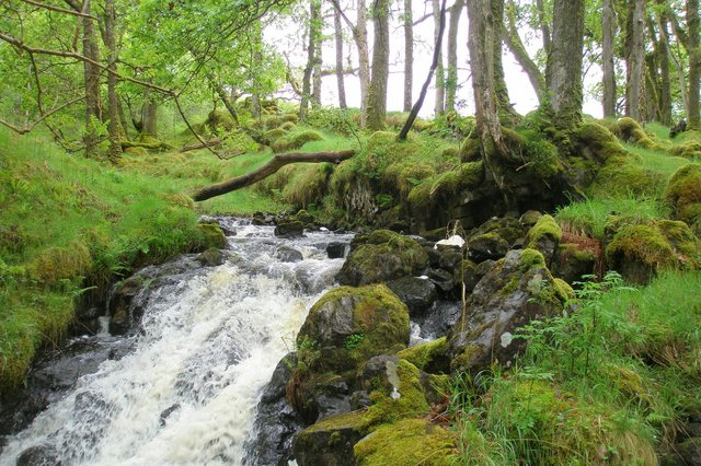 Celtic rainforests are found on the west coast of Scotland - including Lochaline, seen in this picture by Gordon Rothero