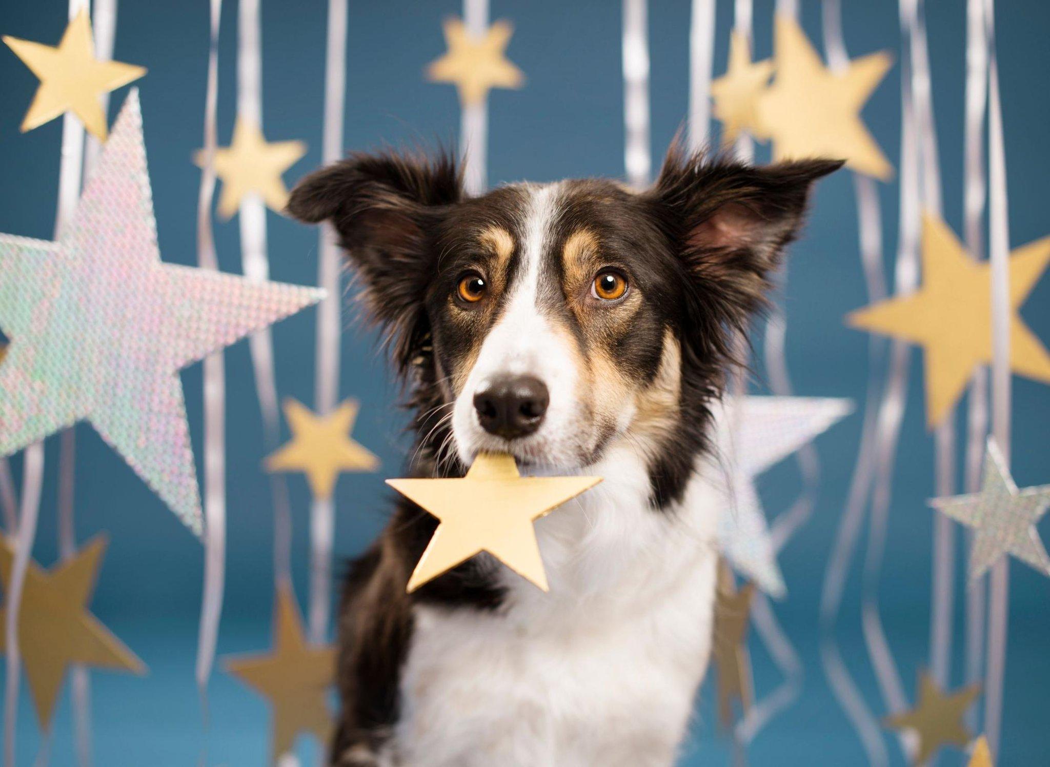 Astrologi anjing: Apa yang dikatakan tanda bintang anjing Anda yang menggemaskan tentang kepribadiannya dan apakah kecocokan Anda tertulis di bintang-bintang?