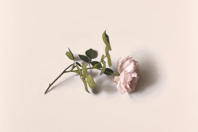 Centifolia, by Alison Watt