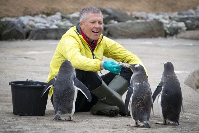 Scottish Liberal Democrat leader Willie Rennie feeds the Gentoo penguins during a visit to Edinburgh Zoo. Picture: Jane Barlow/PA Wire