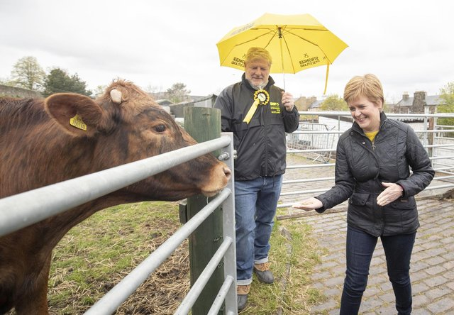 First Minister of Scotland and leader of the SNP Nicola Sturgeon (right), with Edinburgh Central candidate Angus Robertson, feeds the cows during a visit to LOVE Gorgie Farm on May 4  (Photo by Jane Barlow - Pool/Getty Images).