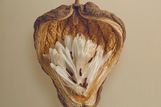 The Cruel Plant, which traps moths and butterflies to maximise pollination