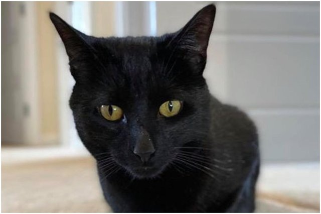 Binx the black cat was killed by a dog in Dalkeith