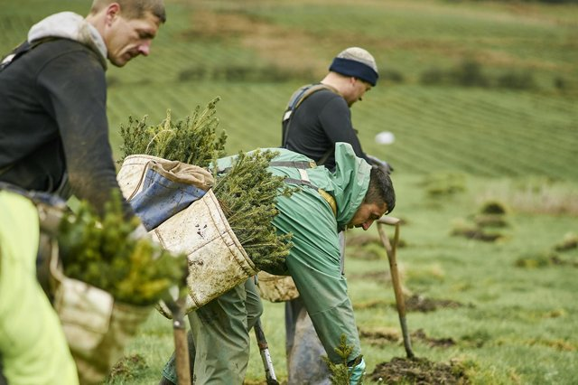 Forestry and Land Scotland has pledged to plant 25 million trees over the next year, helping  battle climate change and boosting the Scottish economy