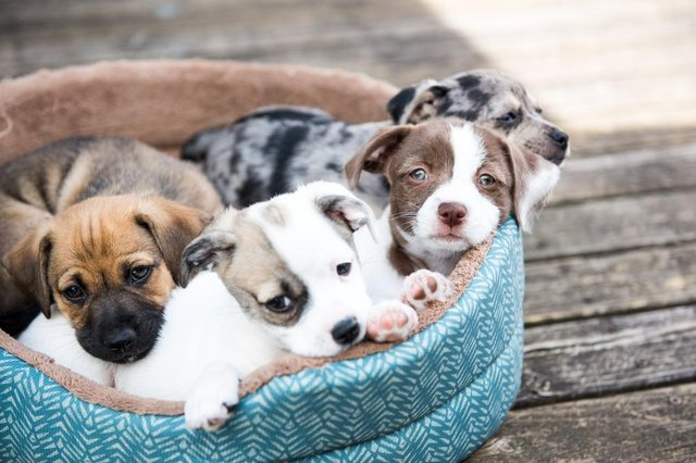 Demand for puppies has skyrocketed during quarantine - but so has puppy scams (Photo: Shutterstock)