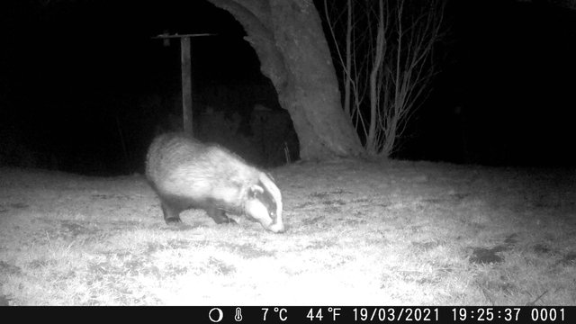 Police launch investigation as protected badgers are targeted in the Highlands.