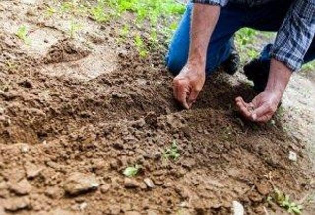 Arable farming soil impact