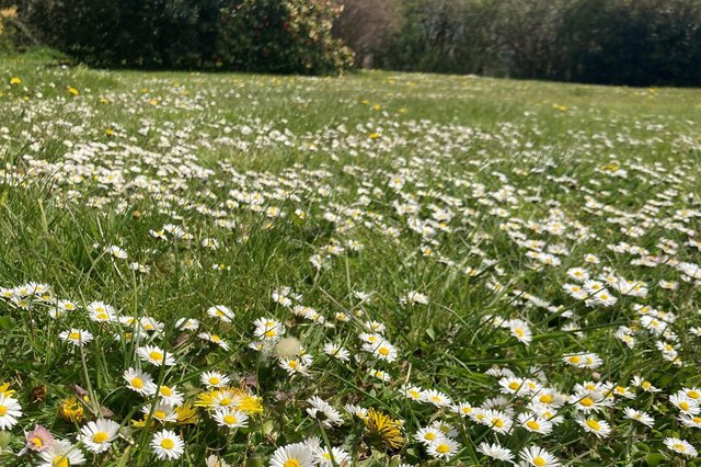 Plantlife's 'No Mow May' campaign may bring sweet relief from the tyranny of mowing (Picture: Archie Thomas/Plantlife/PA Wire)
